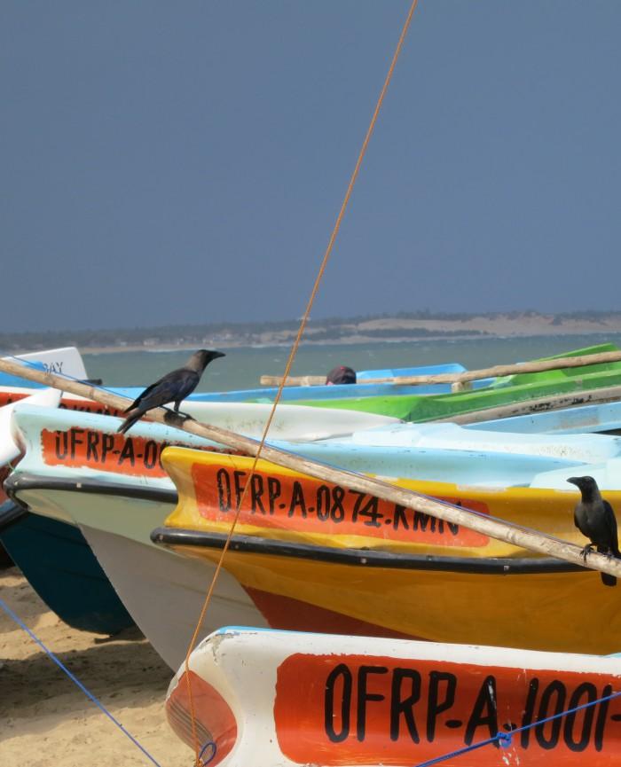 Island Sri Lanka
